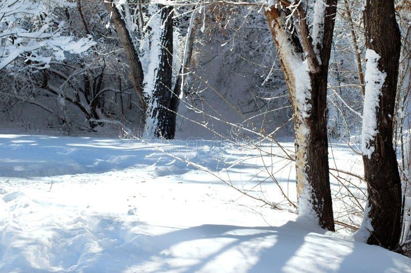 Schatten und Licht an einem Wintertag lizenzfreie stockfotografie