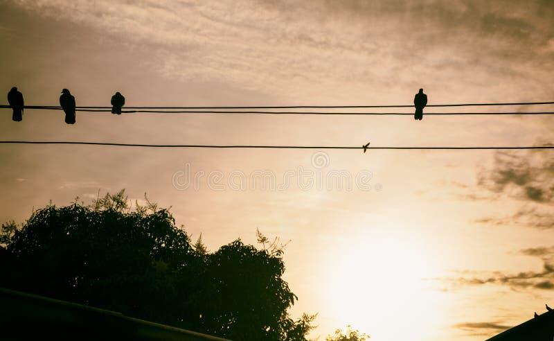 Schatten-Vogel-Insel-Draht die Sonnensätze stockfoto