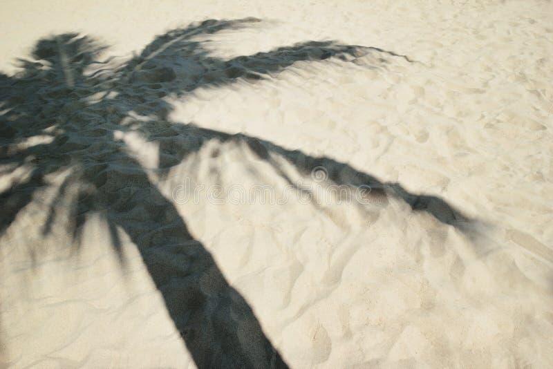 Schatten von der Palme auf einem sandigen Strand stockfotografie