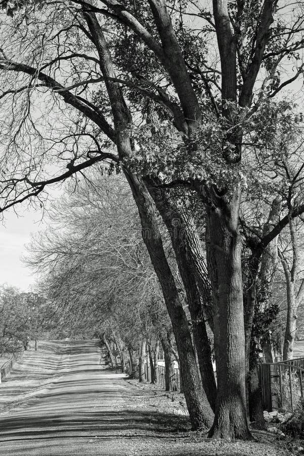 Schatten von Fall-Bäumen und von einsamer Land-Straße stockbilder