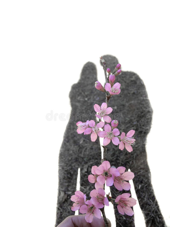 Schatten von liebevollen Paaren hinter rosa Blumen lizenzfreies stockbild