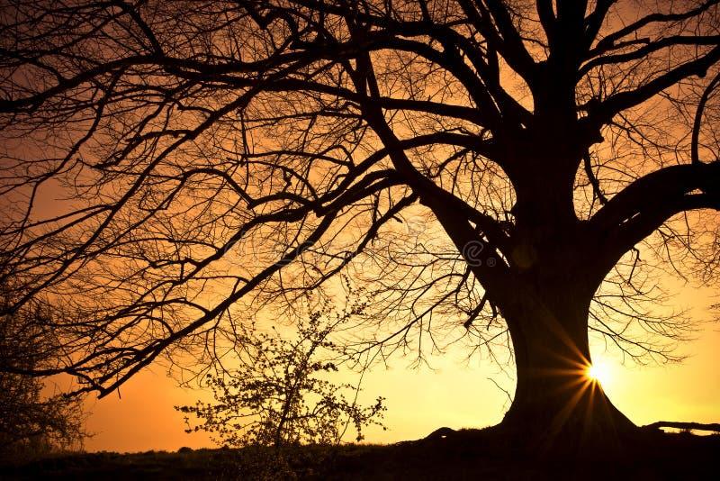 Schattenbild-Baum stockfotos