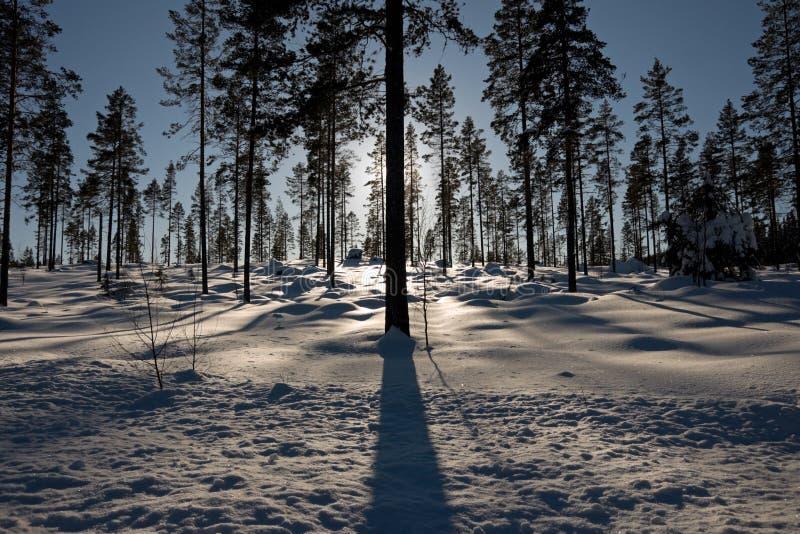 Schattenbild der Bäume lizenzfreie stockfotografie