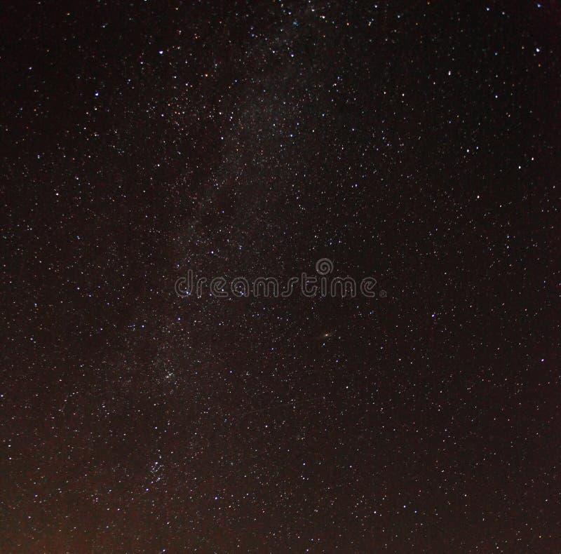 Schattenbild der Bäume gegen nächtlichen Himmel mit Sternen lizenzfreie abbildung