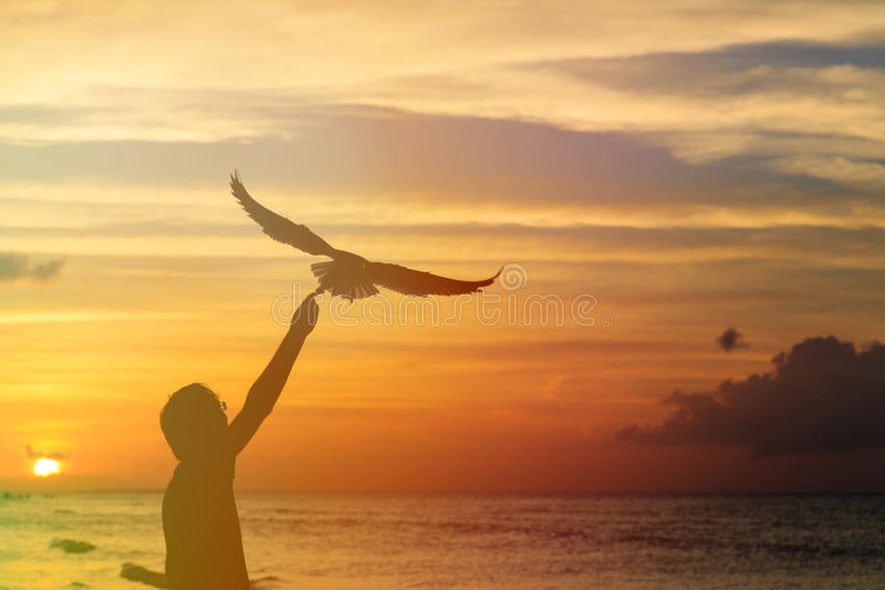 Schattenbild der Fütterungsseemöwe des Mannes bei Sonnenuntergang stockfoto