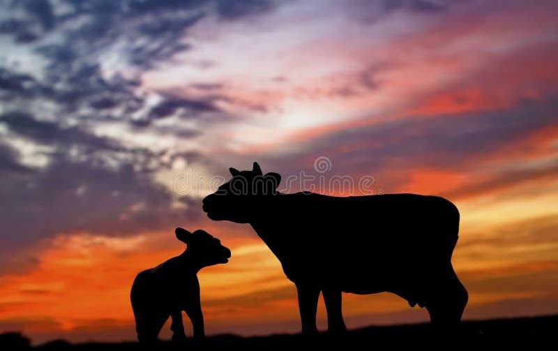 Schattenbild der Kuh und des Kalbs lizenzfreie stockfotos