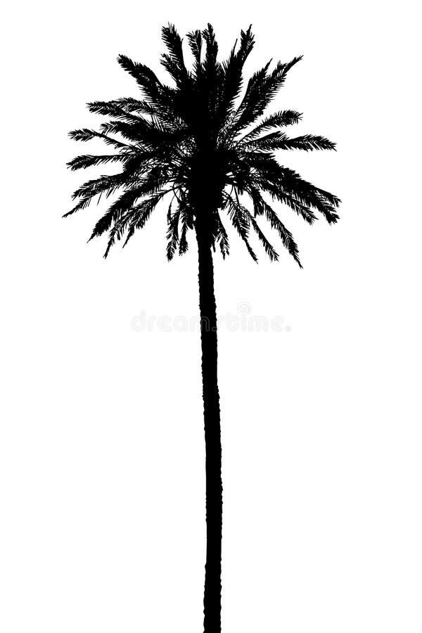 Schattenbild der realistischen Vektorillustration der Palmen stock abbildung