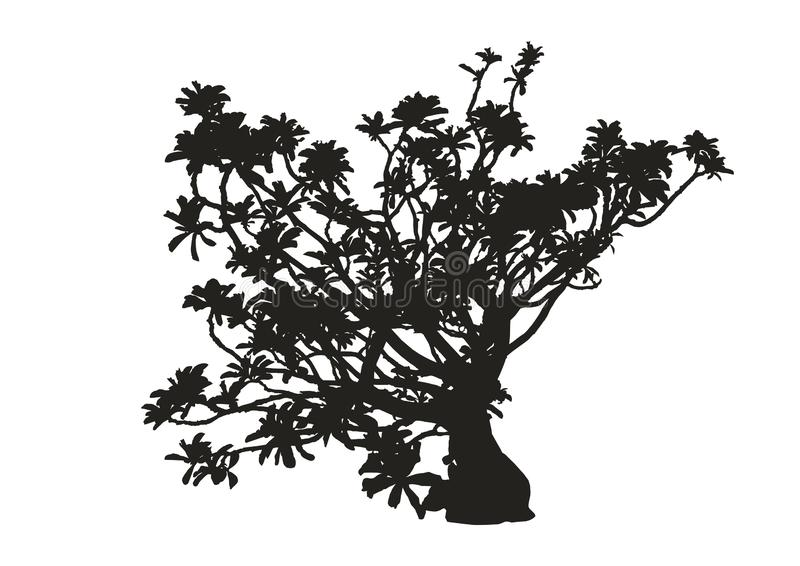 Schattenbild der realistischen Wüstenroseanlage, schwarze Adeniumvektorillustration stock abbildung