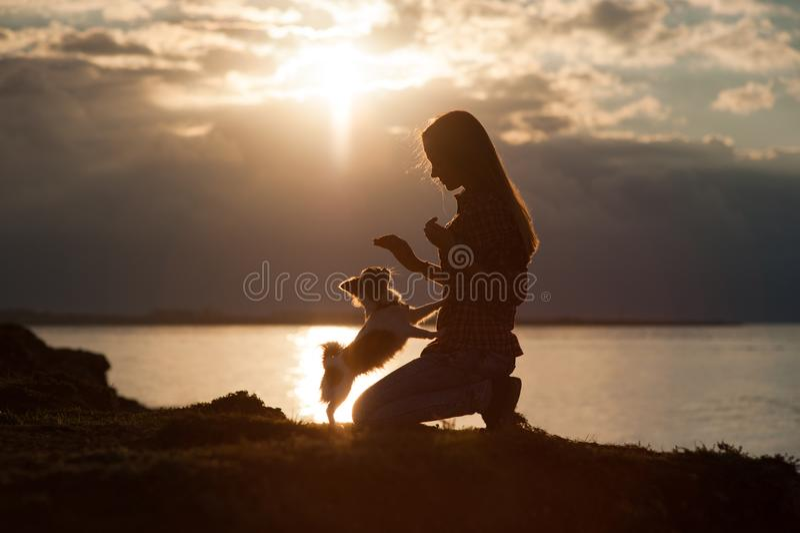 Schattenbild der Trainingschihuahua der jungen Frau des kleinen Hundes auf schönem Seesonnenunterganghintergrund lizenzfreie stockfotografie