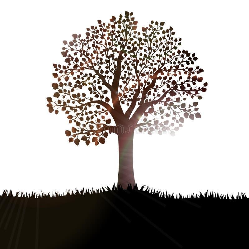 Schattenbild des Baums mit Blättern auf Hügel stock abbildung