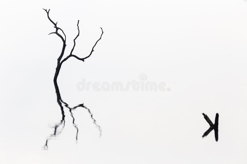 Schattenbild des blattlosen toten Baumstammes, der im Wasser am Reservoir mit Reflexions- und Kopienraum steht Minimalist und Abs lizenzfreie stockbilder