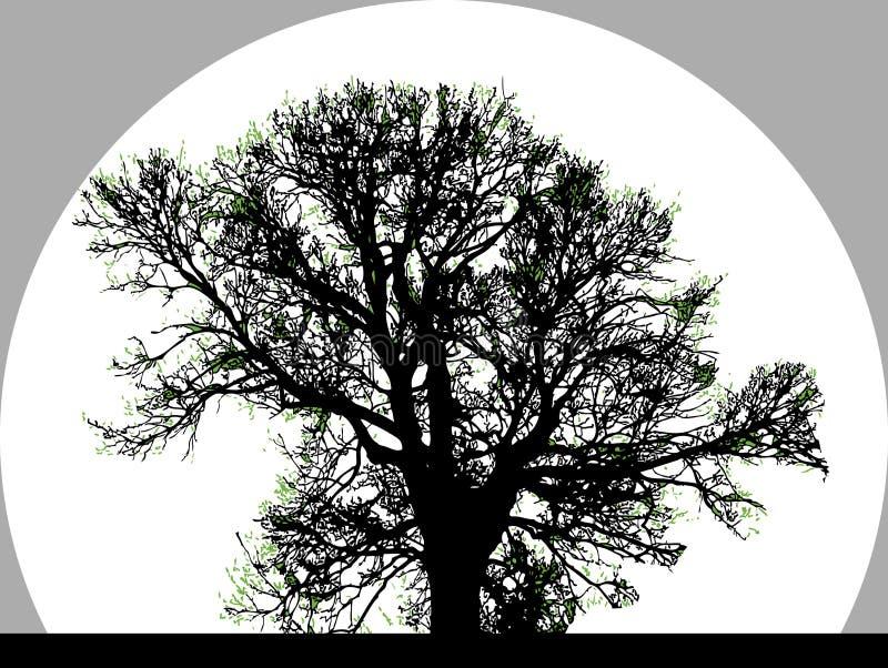 Schattenbild des großen Baums lizenzfreie abbildung