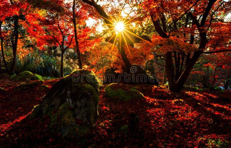 Schattenbild des Herbstblattes mit Sonnenaufflackern in Eikando-Tempel, Kyot stockbilder