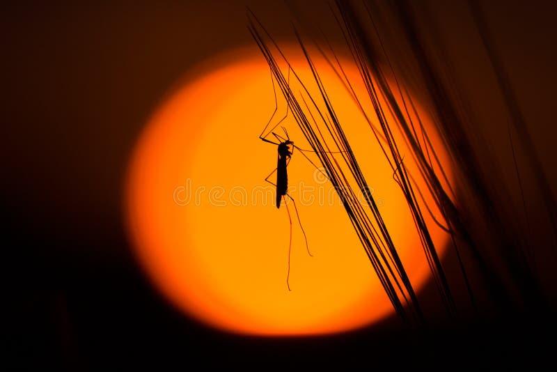 Schattenbild des Insekts auf Strängen stockfoto