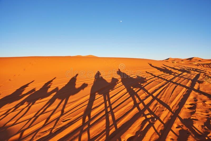 Schattenbild des Kamelwohnwagens in den großen Sanddünen von Sahara-Wüste, stockfotografie