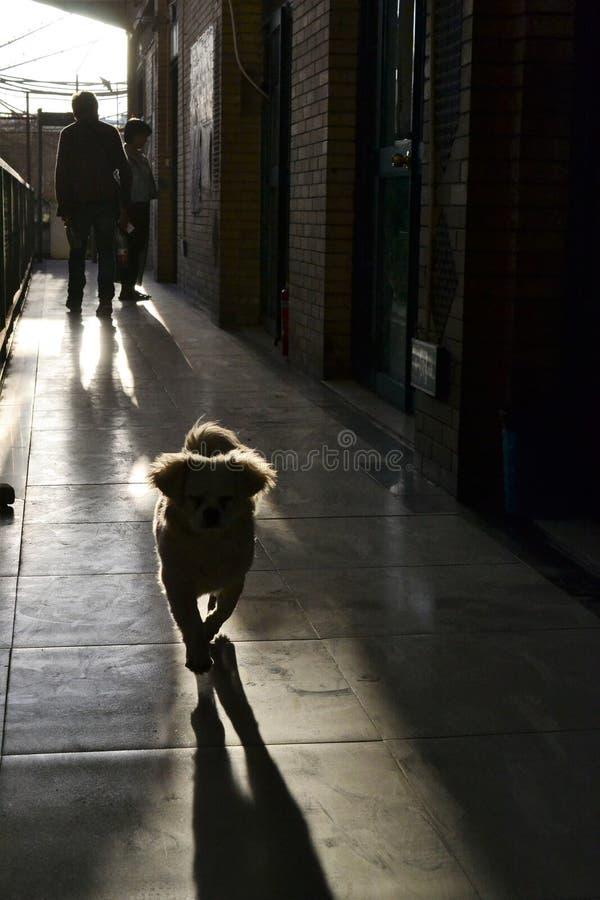 Schattenbild des kleinen Hundes laufend zu Ihnen, Sonnenlicht in der Rückseite, Kaschgar, Xinjiang, China lizenzfreie stockbilder