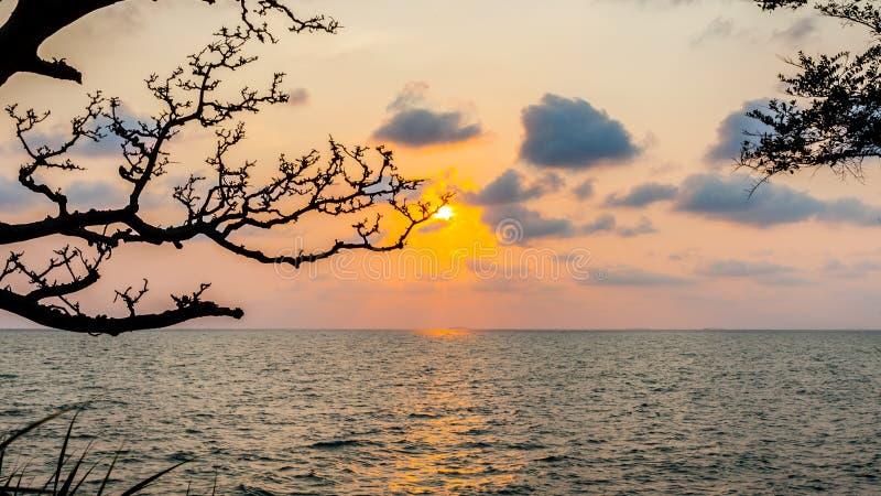 Schattenbild des Niederlassungsbaums mit Sonnenuntergang über Meer stockfotos