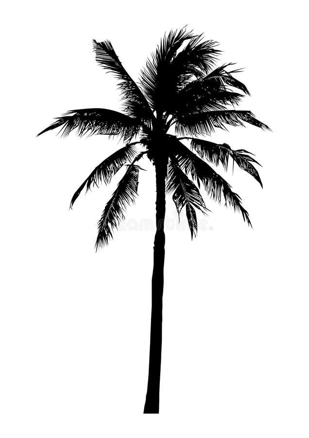 Schattenbild des realistischen Kokosnussbaums, natürlicher Palmenvektor stock abbildung