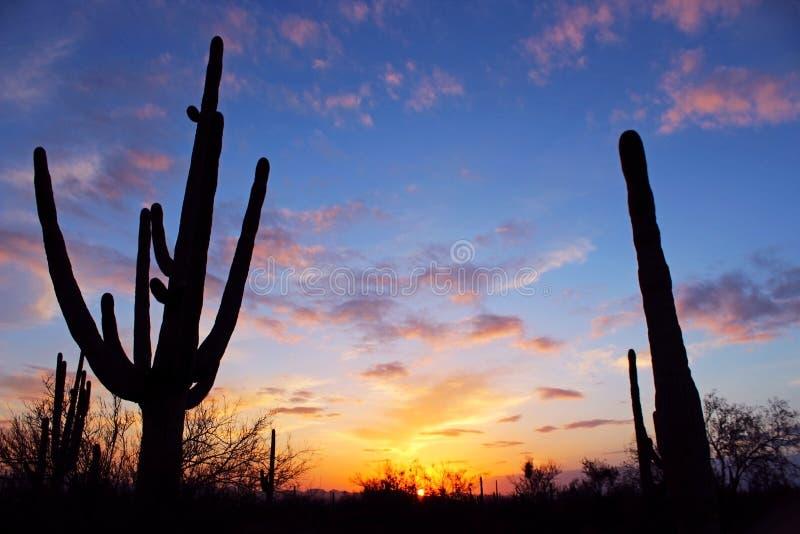 Schattenbild des riesigen Saguaro lizenzfreie stockfotos