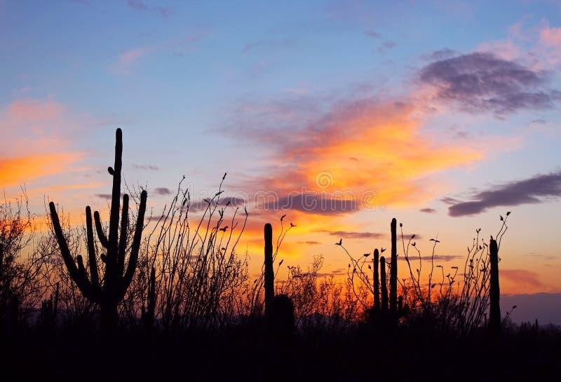 Schattenbild des riesigen Saguaro stockfoto