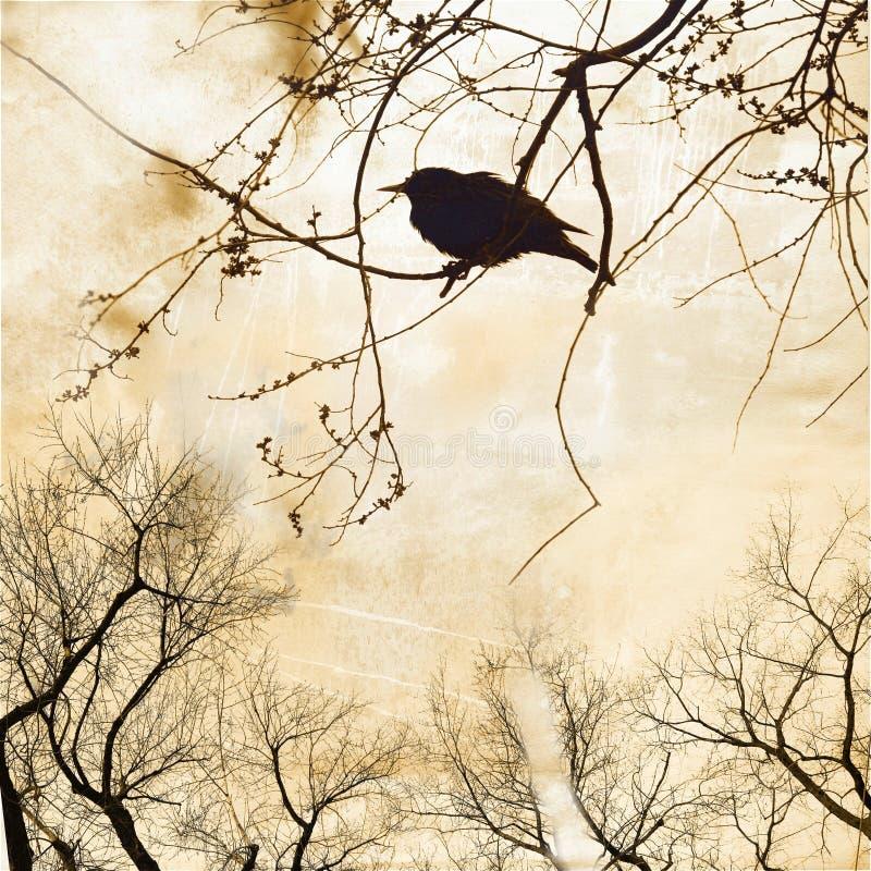 Schattenbild des Rotkehlchens auf bloßem Baum stockbilder