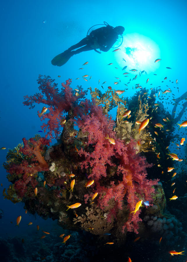 Schattenbild des Unterwasseratemgerättauchers über Korallenriff stockfotografie