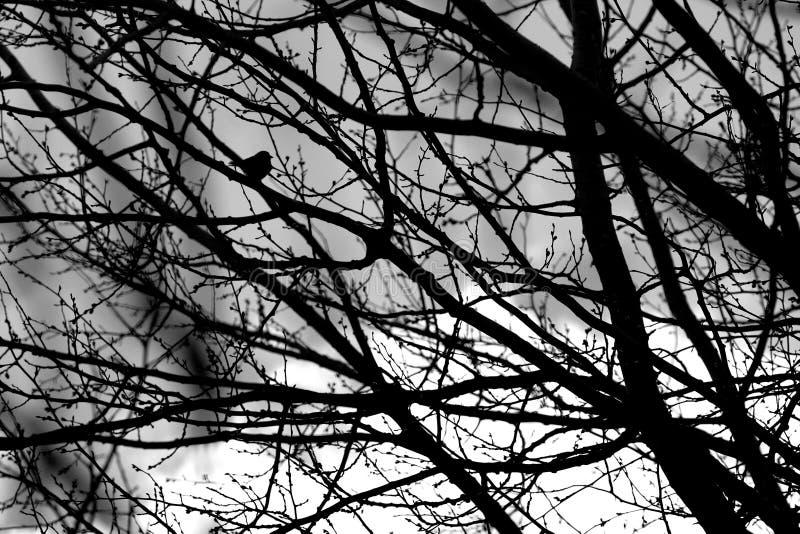 Schattenbild einer Baumkrone lizenzfreies stockfoto