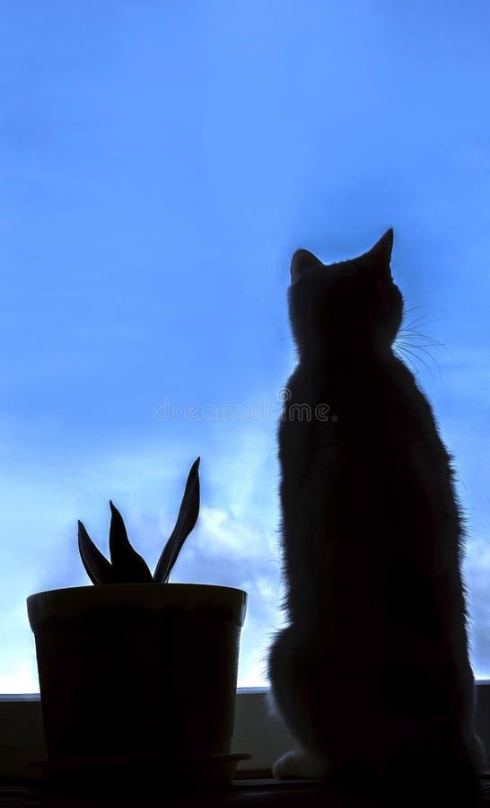 Schattenbild einer Katze, die heraus das Fenster schaut stockfoto
