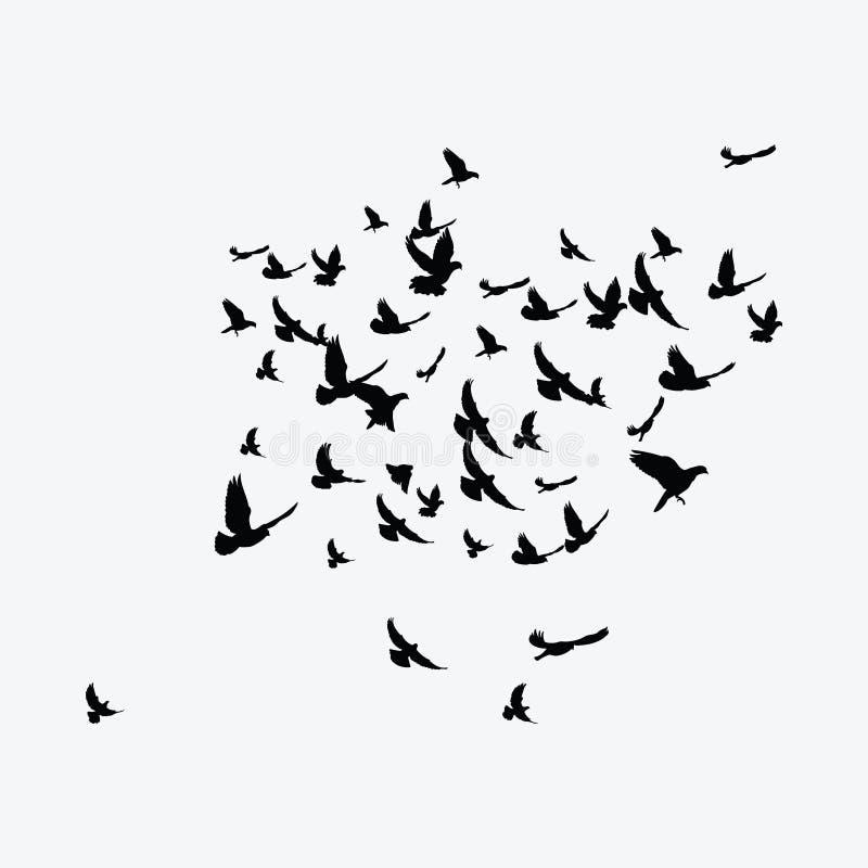 Schattenbild einer Menge der Vögel Schwarze Konturen von Fliegenvögeln Fliegentauben tätowierung vektor abbildung