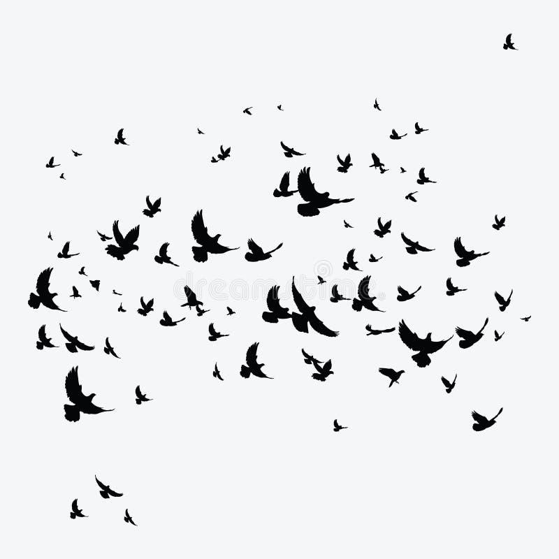 Schattenbild einer Menge der Vögel Schwarze Konturen von Fliegenvögeln Fliegentauben tätowierung stock abbildung