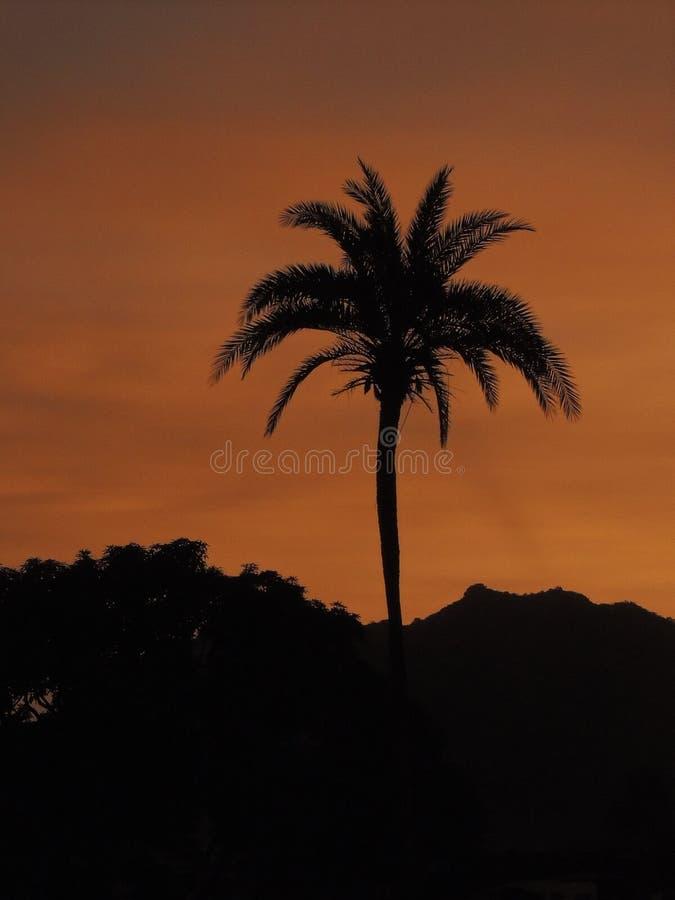 Schattenbild einer Palme lizenzfreie stockfotos