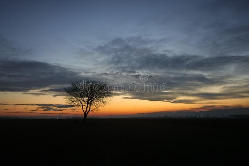 Schattenbild eines alleinen Baums gegen den Glättungsdämmerungshimmel während der blauen Stunde stockbild