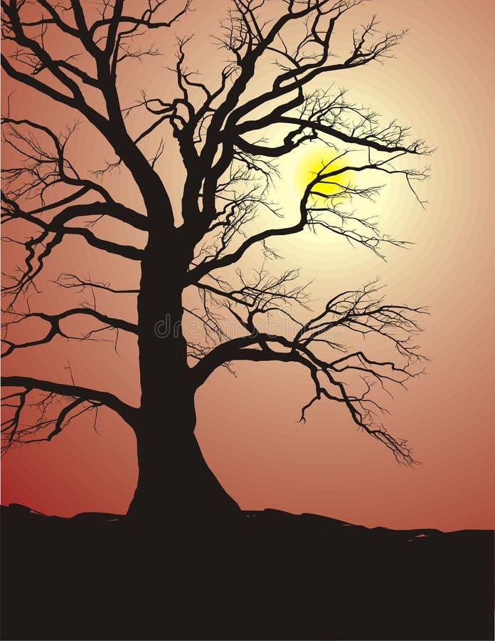 Schattenbild eines alten Baums im Sonnenuntergang vektor abbildung