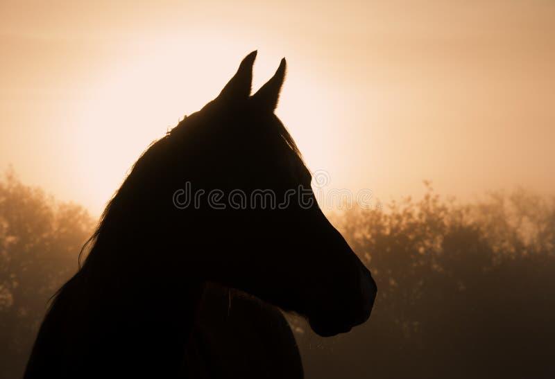 Schattenbild eines arabischen Pferds im dichten Nebel stockfotos