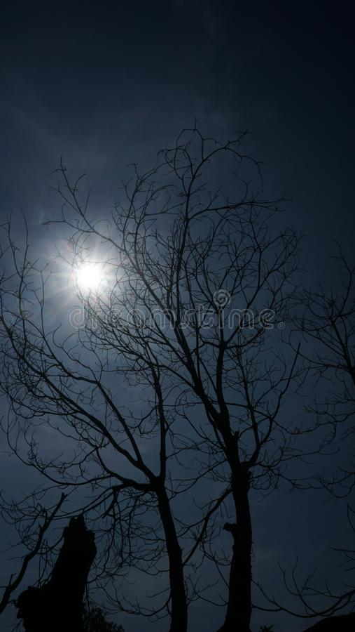 Schattenbild eines Baumasts mit einem Hintergrund des Sonnenlichts und des eher bewölkten Himmels im Sommer stockbild