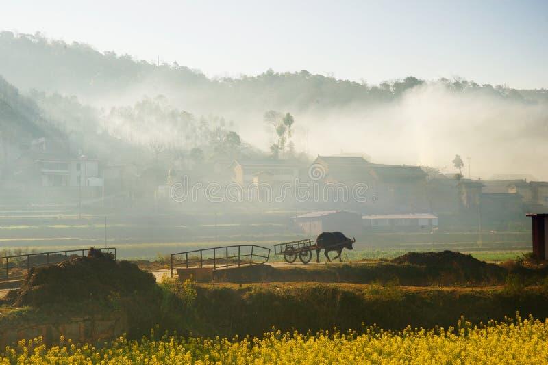 Schattenbild eines Ochsen oder der Kuh mit Wagen gehend in Richtung zum chinesischen Dorf lizenzfreie stockbilder