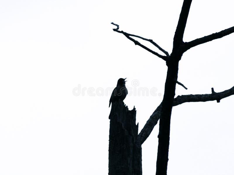 Schattenbild eines schwarzen Vogels lizenzfreies stockfoto