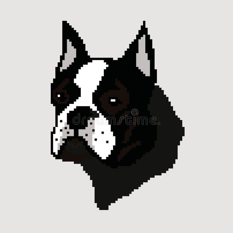 Schattenbild eines schwarzen Zuchthundes Bostons Terrier, Kopf gezeichnet durch Quadrate, Pixel Das Bild des Mündungszucht Schwar lizenzfreie abbildung