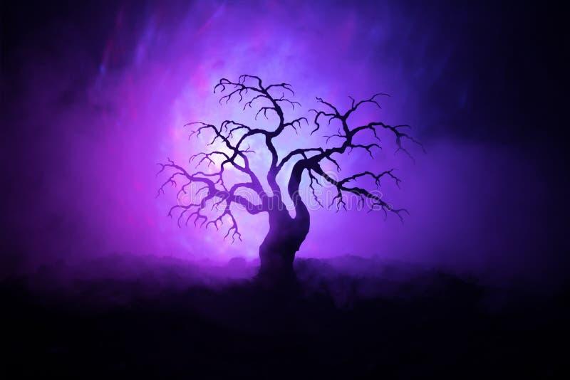 Schattenbild furchtsamen Halloween-Baums auf dunklem nebeligem getontem Hintergrund mit Mond auf Rückseite stockbilder