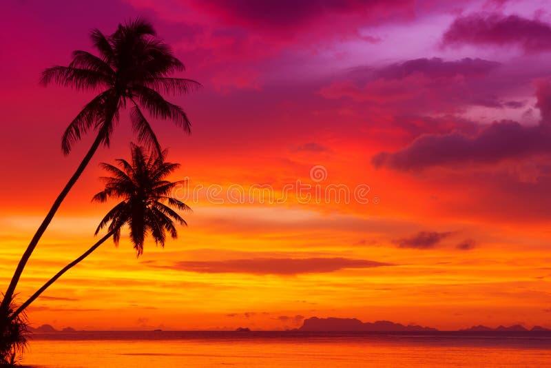 Schattenbild mit zwei Palmen lizenzfreies stockfoto