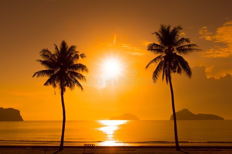 Schattenbild mit zwei Palmen auf Sonnenuntergang lizenzfreies stockbild