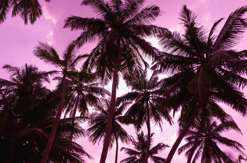 Schattenbild mit zwei Palmen auf Sonnenuntergangstrand lizenzfreies stockbild