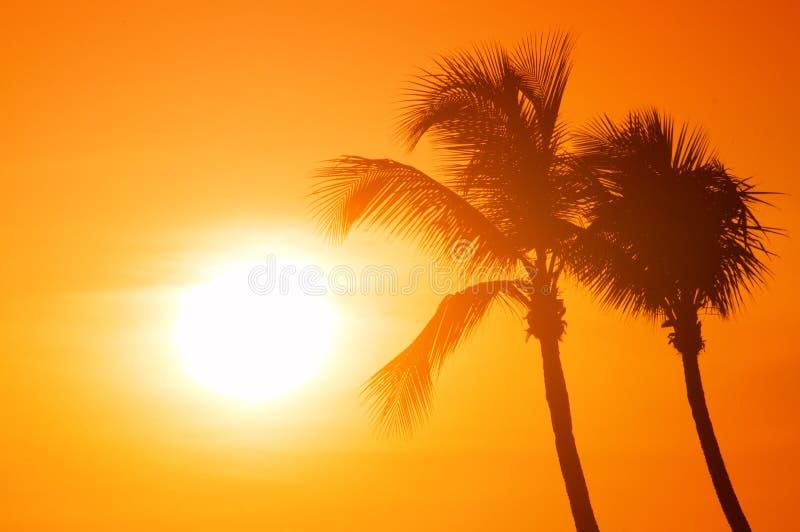Schattenbild mit zwei Palmen auf tropischem Strand des Sonnenuntergangs stockbilder