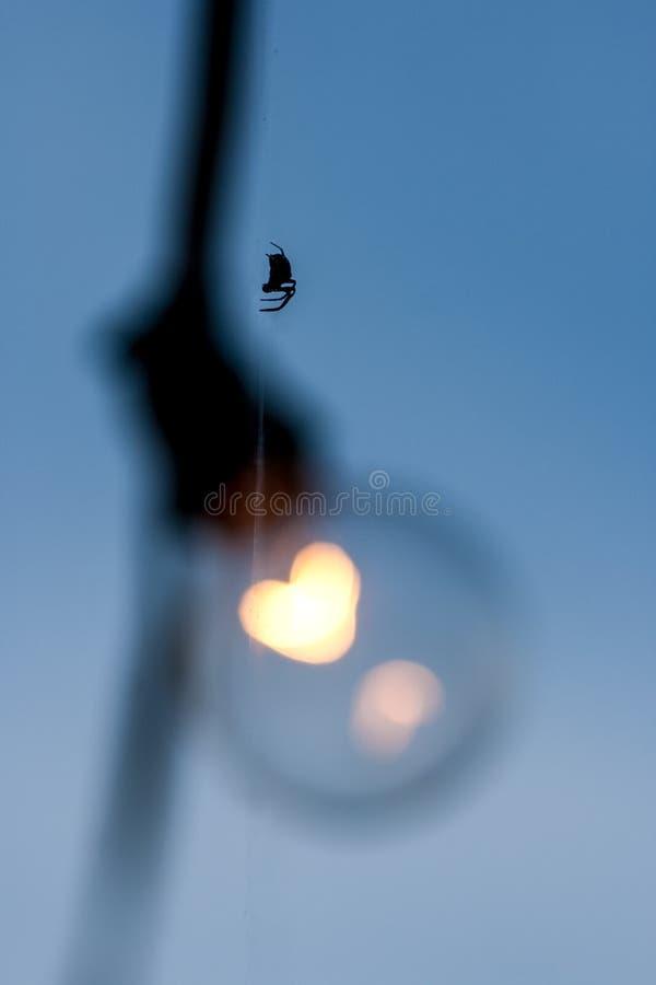 Schattenbild-Spinne auf Netz-Strang stockfoto