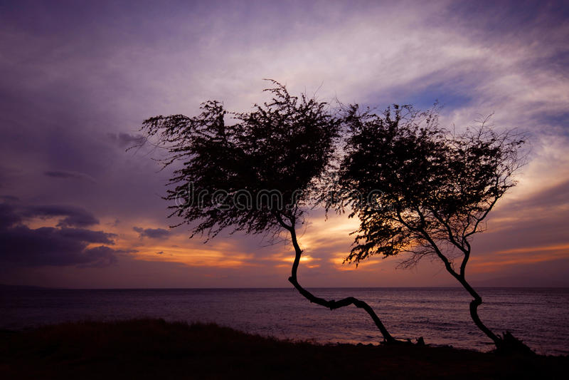 Schattenbild von Bäumen bei Sonnenuntergang stockbild