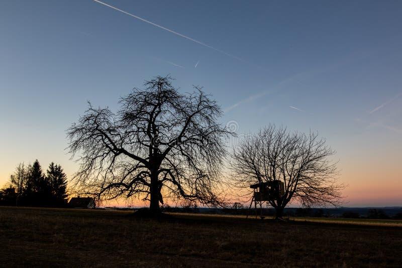Schattenbild von Bäumen mit einem Baumhaus nach Sonnenuntergang stockbilder