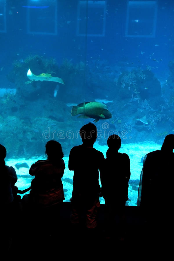 Schattenbild von Besuchern zum Unterwasseraquarium mit Fischen im Hintergrund lizenzfreies stockbild