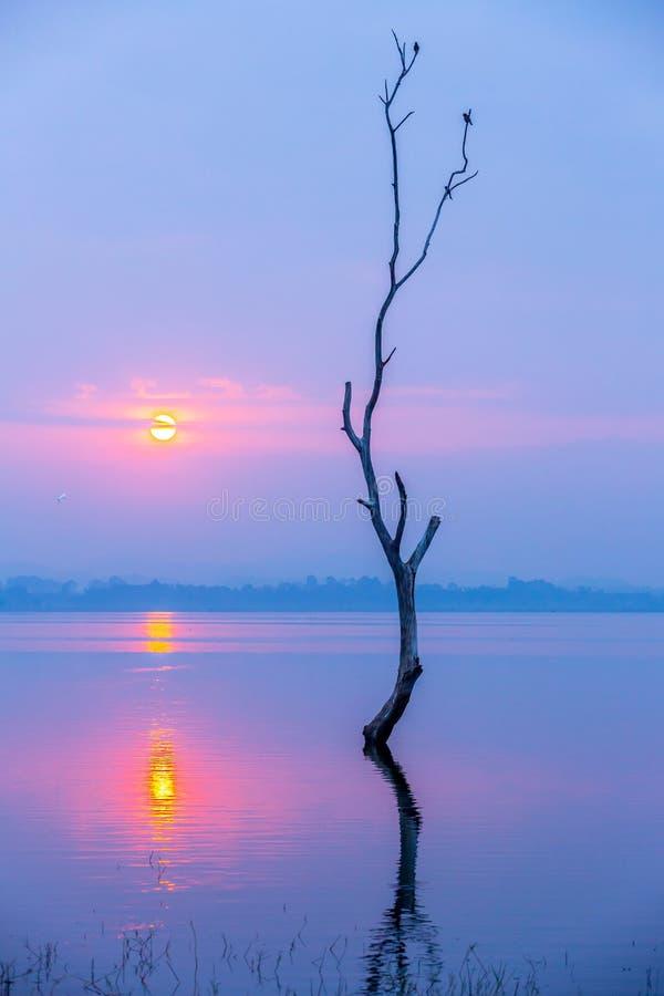 Schattenbild von den Vögeln, die auf totem Holz vor Sonnenaufgang über großem See von Bangpra-Reservoir, der berühmte Platz in Ch lizenzfreie stockfotografie