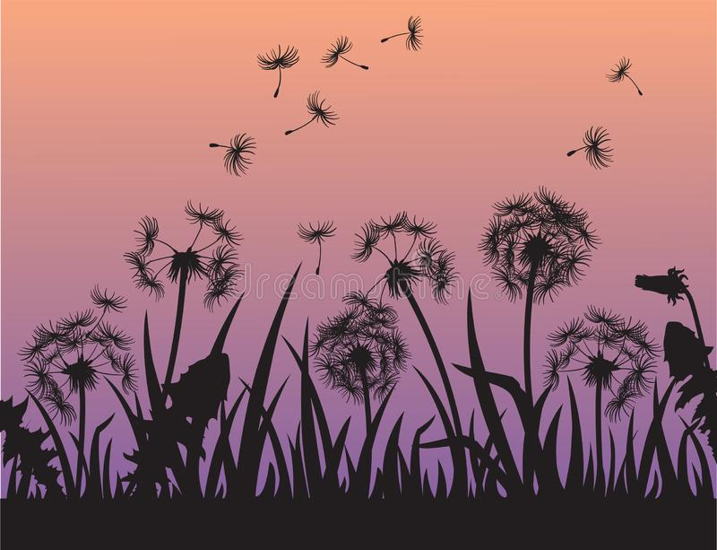 Schattenbild von Löwenzahnblumen im Gras vektor abbildung