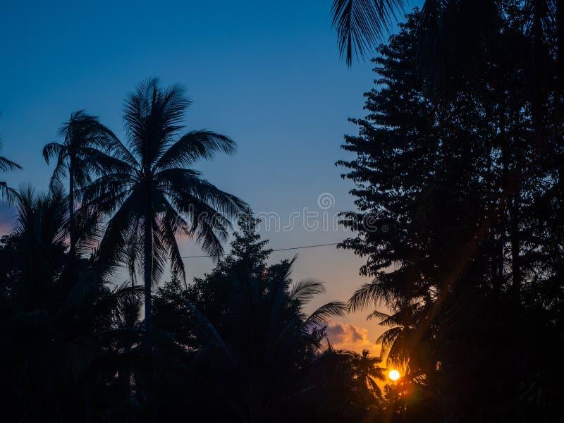 Schattenbild von Palmen am Sonnenuntergang und an den mehrfarbigen Wolken lizenzfreie stockfotografie